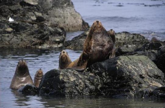Фотограф Роб Райнен. Защита природы стоит того, посмотрите - №10
