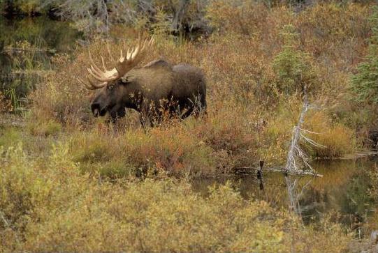 тема защита природы