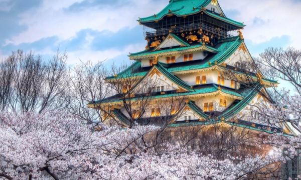 цветущая сакура фото