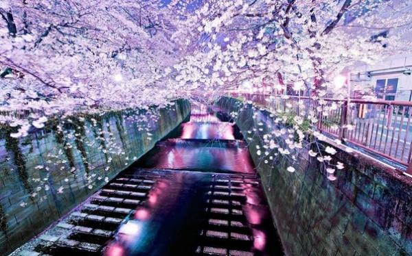 Фото сакуры цветущей в Японии увидите вы - №17