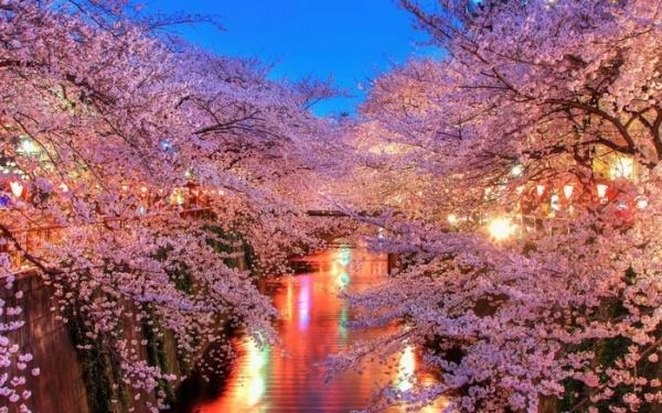 Фото сакуры цветущей в Японии увидите вы - №19