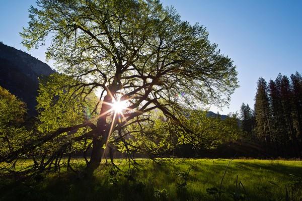Солнце как элемент композиции - №3