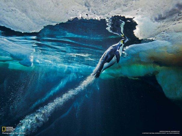Paul Nicklen