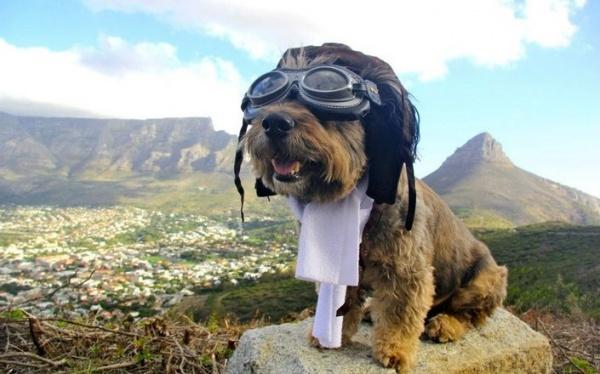 Интересная фото история о псе, который увидел весь мир - №1