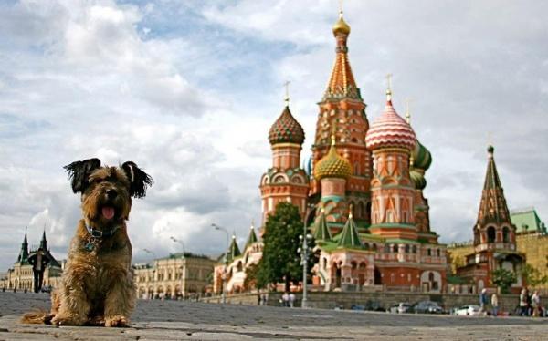 Интересная фото история о псе, который увидел весь мир - №2