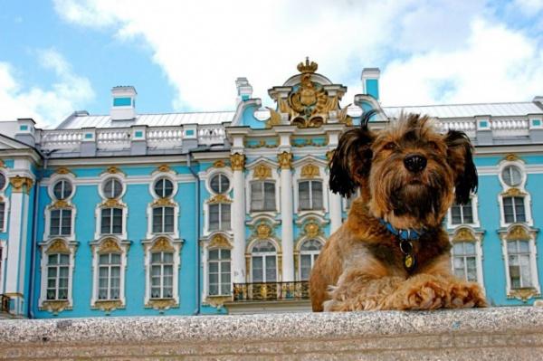 Интересная фото история о псе, который увидел весь мир - №3