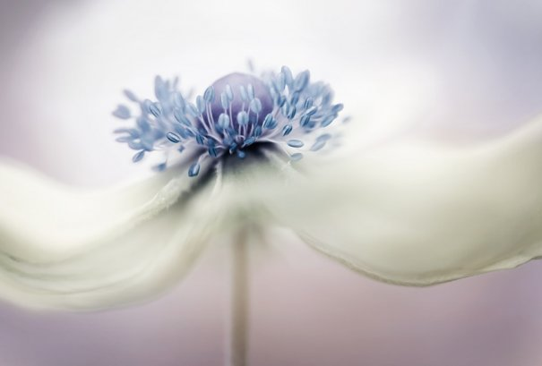 mandy_disher_01
