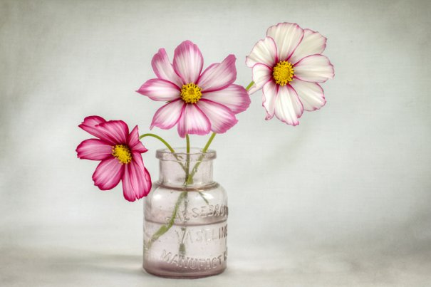 mandy_disher_08