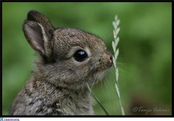 Удачные фото кадры животного мира - №1