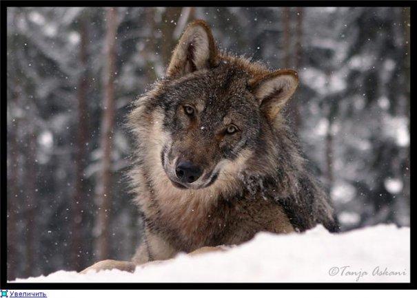 Удачные фото кадры животного мира - №2