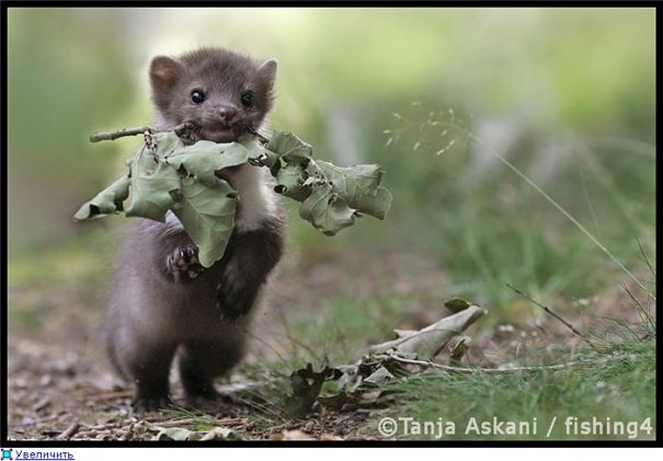 Удачные фото кадры животного мира - №3