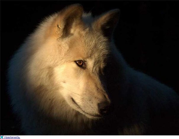 Удачные фото кадры животного мира - №4