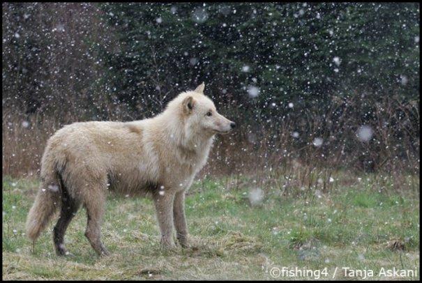 Удачные фото кадры животного мира - №6