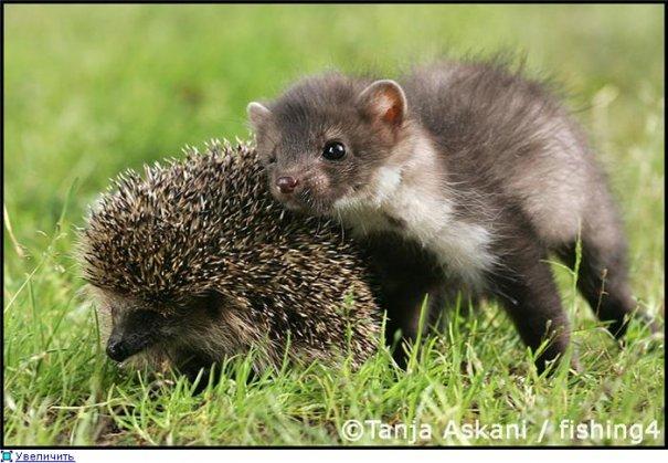 Удачные фото кадры животного мира - №7