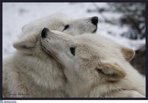 Удачные фото кадры животного мира - №8