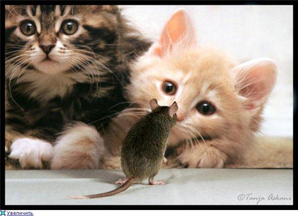 Удачные фото кадры животного мира - №10