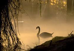 Уроки фотографии: съемка в тумане - №10