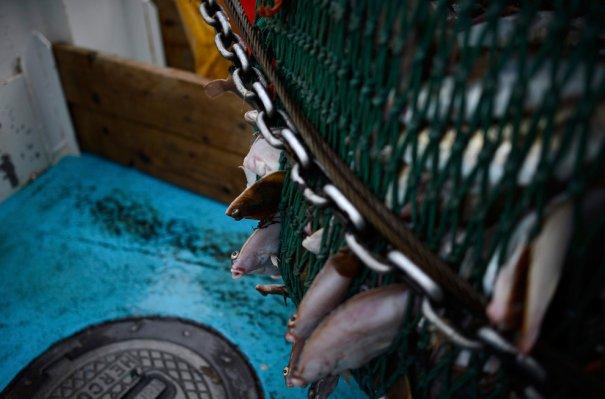 Рыбаки Англии - №10