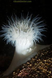 Уроки фотографии: подводная макро съемка - №4