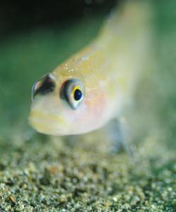 Уроки фотографии: подводная макро съемка - №5