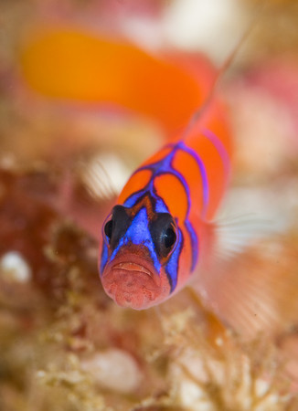Уроки фотографии: подводная макро съемка - №7