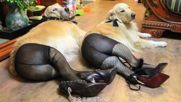 фото юмор животные