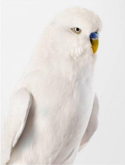 Попугаи фотографа Лейлы Джеффрис/Leila Jeffreys - №4