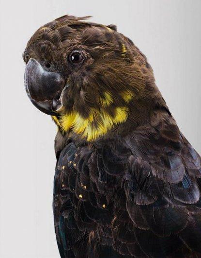 Попугаи фотографа Лейлы Джеффрис/Leila Jeffreys - №12