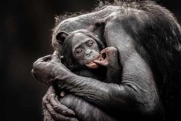 Фотоконкурс National Geographic Traveler 2013 - №4
