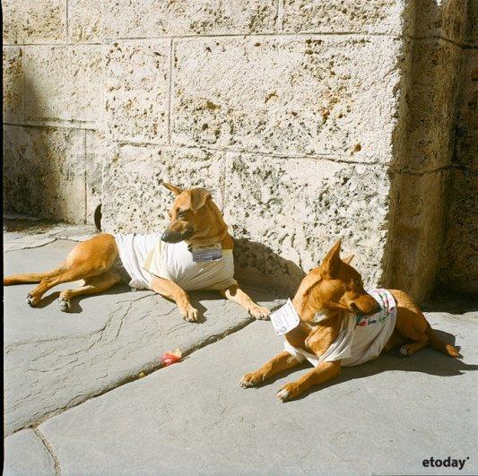 фото жизни на Кубе 6