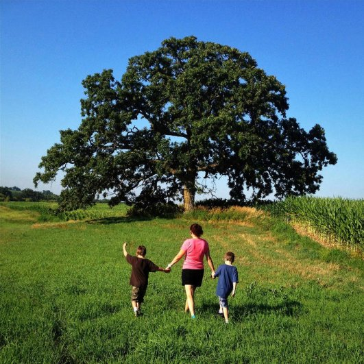 Самая длинная фотосессия одного дерева, снятая на iPhone - целый год! - №1