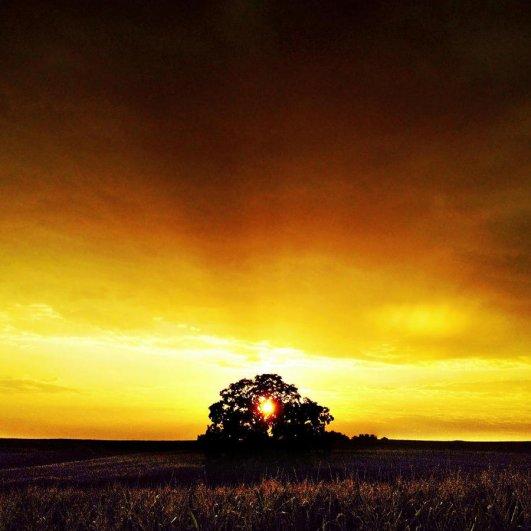 Самая длинная фотосессия одного дерева, снятая на iPhone - целый год! - №3