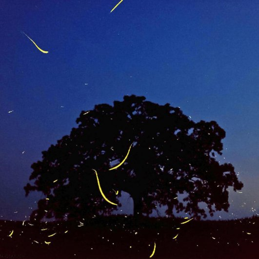 Самая длинная фотосессия одного дерева, снятая на iPhone - целый год! - №4
