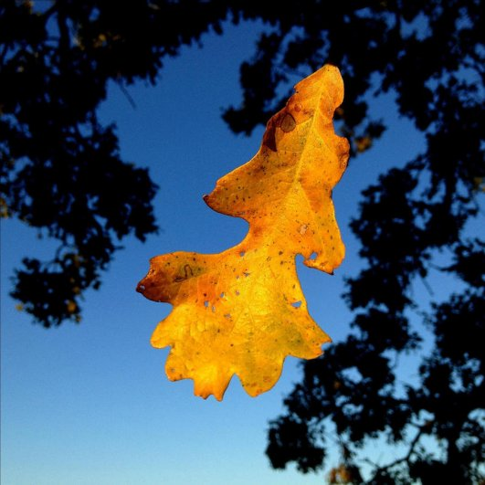 Самая длинная фотосессия одного дерева, снятая на iPhone - целый год! - №5