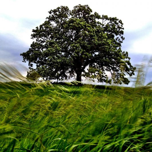 Самая длинная фотосессия одного дерева, снятая на iPhone - целый год! - №10