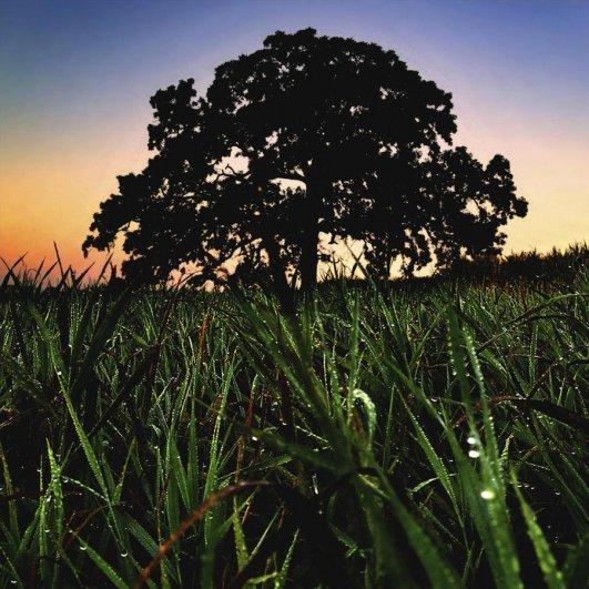 Самая длинная фотосессия одного дерева, снятая на iPhone - целый год! - №11