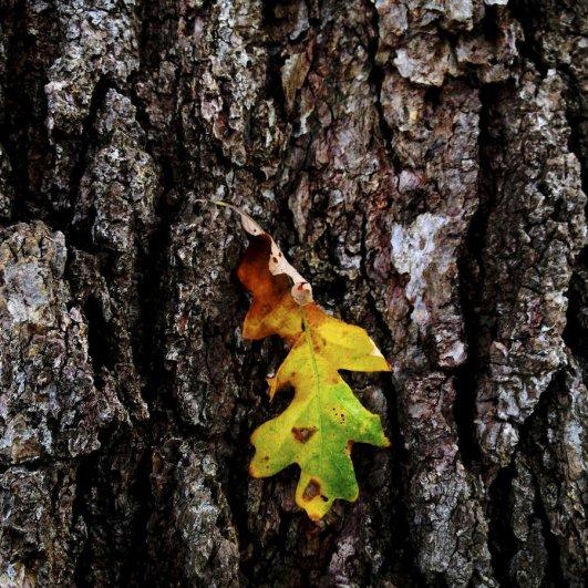 Самая длинная фотосессия одного дерева, снятая на iPhone - целый год! - №12