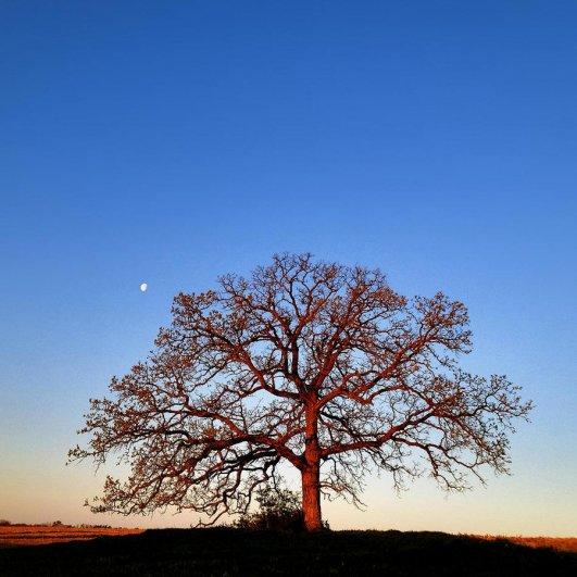 Самая длинная фотосессия одного дерева, снятая на iPhone - целый год! - №13