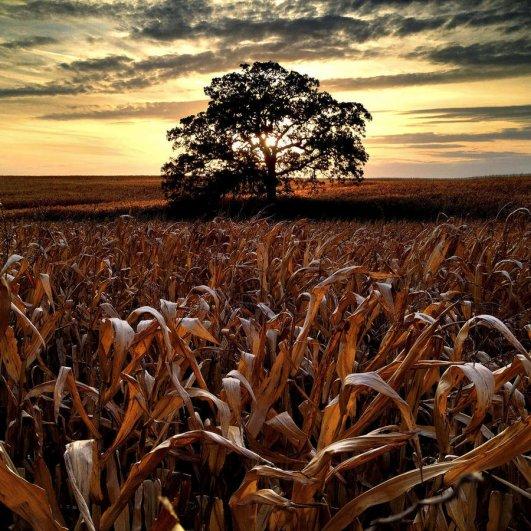 Самая длинная фотосессия одного дерева, снятая на iPhone - целый год! - №14
