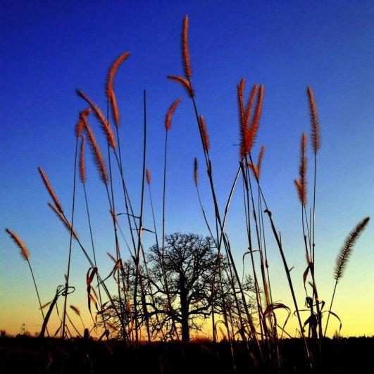 Самая длинная фотосессия одного дерева, снятая на iPhone - целый год! - №18