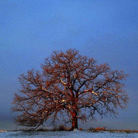 Самая длинная фотосессия одного дерева, снятая на iPhone - целый год! - №22