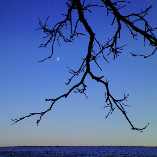 Самая длинная фотосессия одного дерева, снятая на iPhone - целый год! - №23