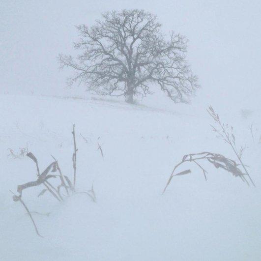 Самая длинная фотосессия одного дерева, снятая на iPhone - целый год! - №24