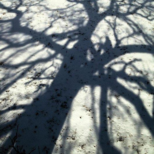 Самая длинная фотосессия одного дерева, снятая на iPhone - целый год! - №25
