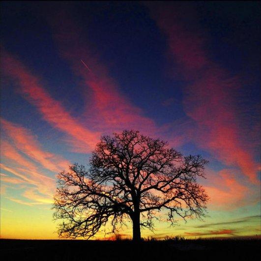 Самая длинная фотосессия одного дерева, снятая на iPhone - целый год! - №26