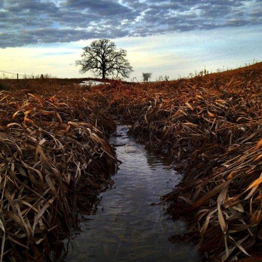 Самая длинная фотосессия одного дерева, снятая на iPhone - целый год! - №27