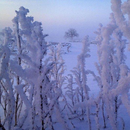 Самая длинная фотосессия одного дерева, снятая на iPhone - целый год! - №28