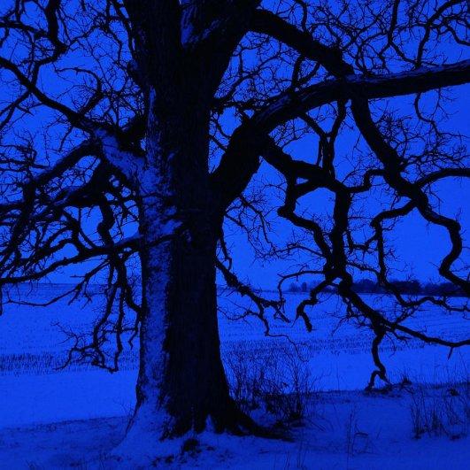 Самая длинная фотосессия одного дерева, снятая на iPhone - целый год! - №29