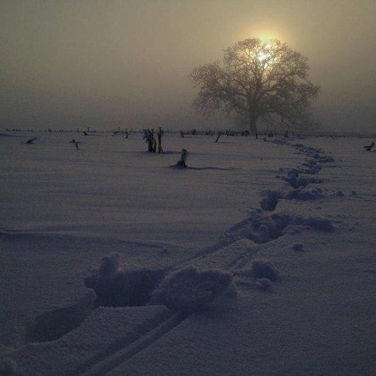 Самая длинная фотосессия одного дерева, снятая на iPhone - целый год! - №30