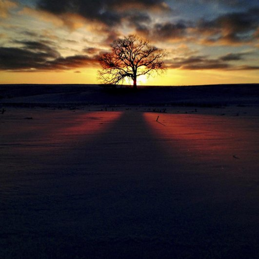 Самая длинная фотосессия одного дерева, снятая на iPhone - целый год! - №32